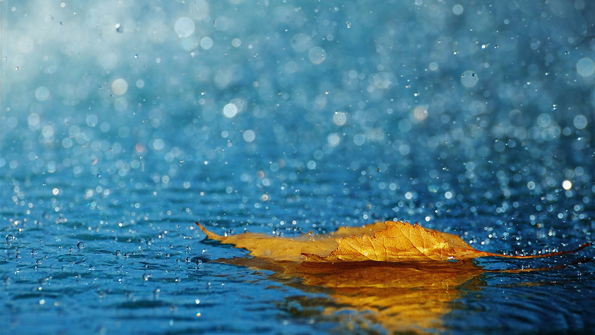 hd-wallpapers-raindrops-close-up-desktop-wallpaper-download-1920x1080-wallpaper