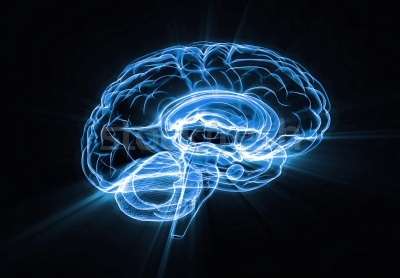 162311_stock-photo-brain-illustration