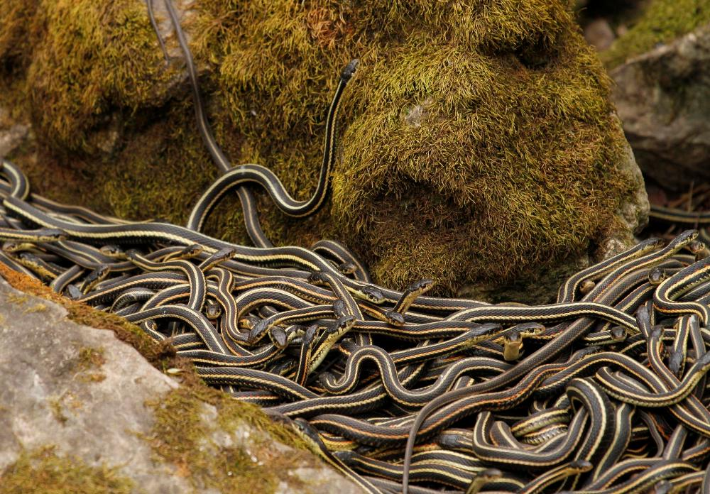 Narcisse-Snake-Dens-Manitoba-Canada-By-Jukka-Palm