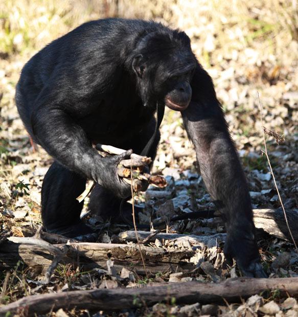 gathering-firewood_2096590i