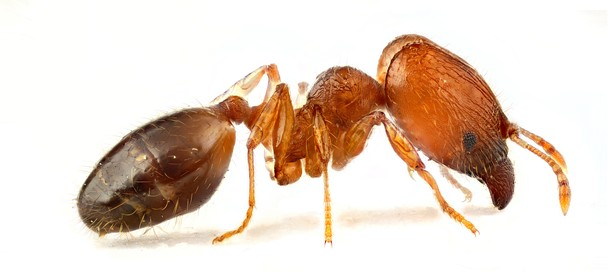 how giant ants taught me about How giant ants taught me about nuclear warfare posted on may 22, 2018 march 28, 2018 author admin comment(0) this is precisely what director gordon douglas does through the movie, them , a 1954 sci- fl horror film based in the desert of new mexico.