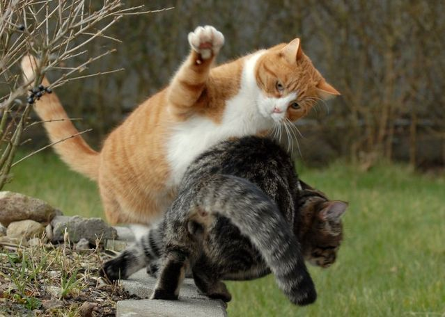 cat_flying_fight_02