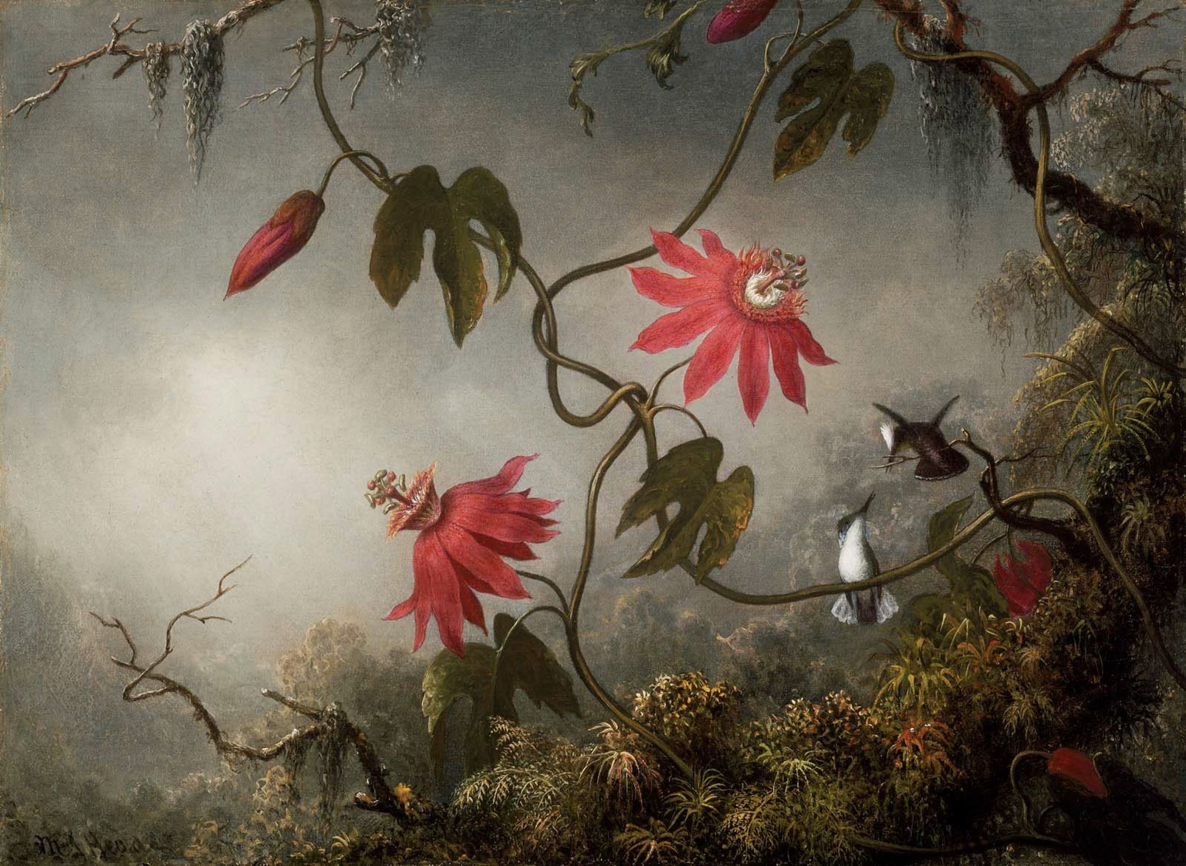 passion-flowers-with-hummingbirds-1883