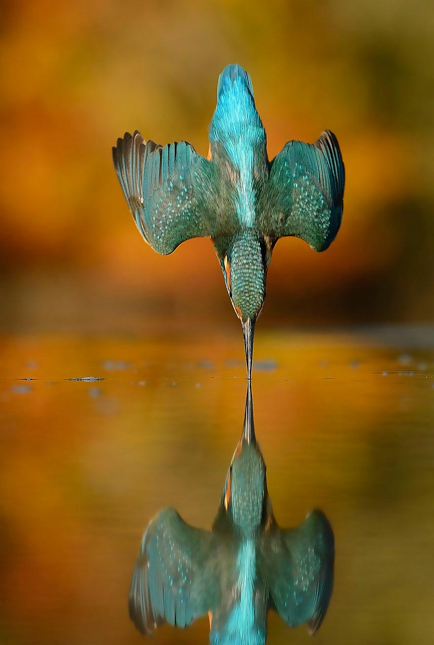 After-6-Years-Photographer-Finally-Takes-Perfect-Shot-Of-Kingfisher-8