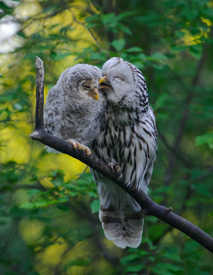 cute-bird-parents-33__700