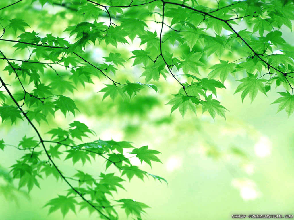 tree-of-spring-leaves-wallpapers-1024x768