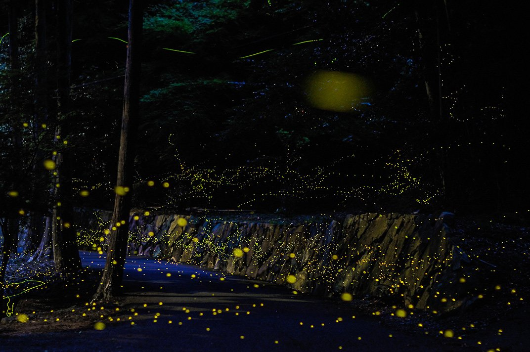 05-all-that-glitters.jpg__1072x0_q85_upscale